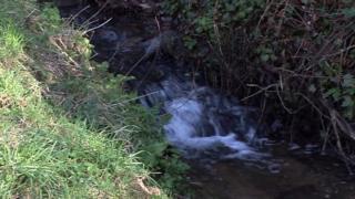 Jersey stream