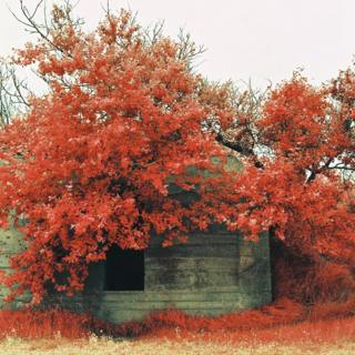 Infrared photograph of a bunker beneath tree branches