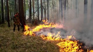 Законопроект предусматривает изъятие земельных участков у собственников за нарушение требований пожарной безопасности