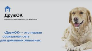 Beta page of Russian pet social media site DruzhOK