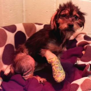 Image of injured dog