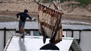 Experts of the Russian Research Institute of Fisheries and Oceanography (VNIRO) begin an operation to release the first two orcas