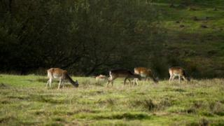Deer at New Forest National Park