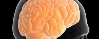 मानव मस्तिष्क का विकास