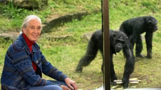 Nhà khoa học Jane Goodall dành cả sự nghiệp để nghiên cứu và tuyên truyền bảo vệ động vật hoang dã