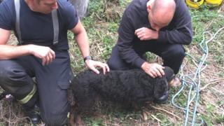 Dog rescue, Wiltshire