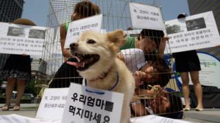 Seul'da köpek eti yenmesine karşı düzenlenen bir gösteri