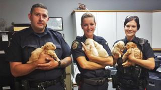Three police officers holding five puppies