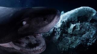 Un tiburon a punto de golpear el submarino.