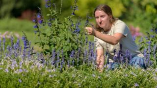 امرأة تعتني بحديقة المنزل