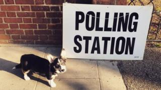 Frank, a dog, is waiting outside a polling station in north London