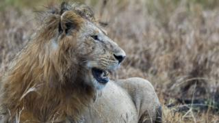 South Africa: Poacher killed by elephant then eaten by lions