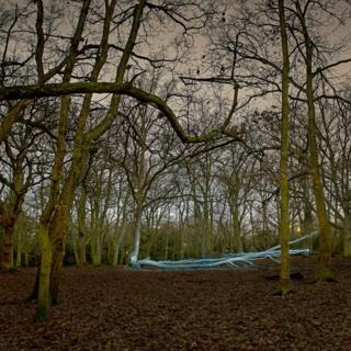 Árbol caído en un bosque al sur de Londres
