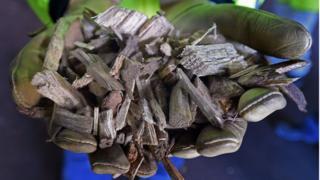 woody biomass