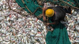 幾內亞科納克里一名漁工在一艘中國漁船上處理漁獲(2/4/2017)