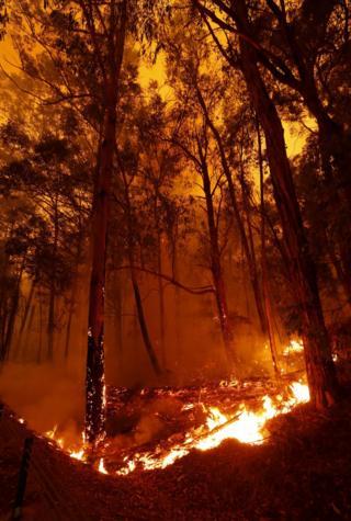 Bushfires burn