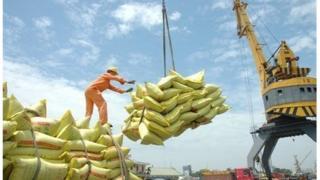 Hoạt động xuất khẩu gạo