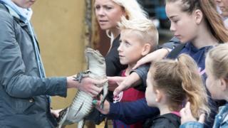 Baby alligator is shown to children at Noah's Ark Zoo Farm near Bristol