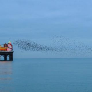 Starling murmuration by a pier