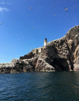 Sea birds at Bass Rock