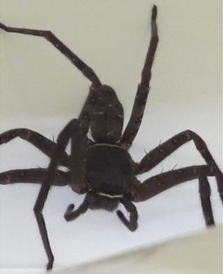 Giant spider found in shipping container in Scotland