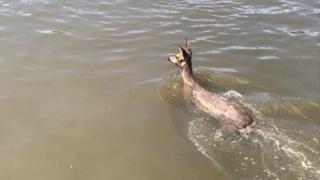 Deer in Manchester