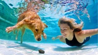 Собака и женщина под водой