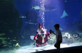 Santa scuba dives with the sharks and stingrays in the main tank.