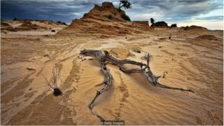 तेज़ी से गर्म हो रही दुनिया को घास-फ़ुस कैसे बचा सकते हैं?