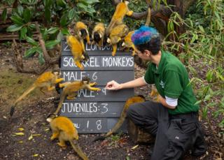 Donald Trump Zookeeper Rowan Swainson counts squirrel monkeys