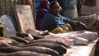 मछली, बिहार