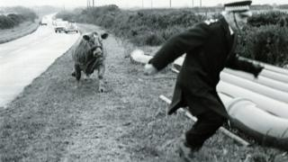 An escaped cow chases Sgt Bill Smith