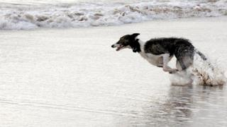 David Nicol, of Stonehaven, photographed this dog going flat out on St Cyrus beach.