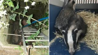 Drainage shaft and badgers