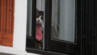 Кот Джеймс в посольстве Эквадора в Лондоне