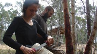 A kangaroo skin is cleaned on a fleshing beam