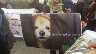 پلیس ایران حیوان آزاران را تعقیب میکند