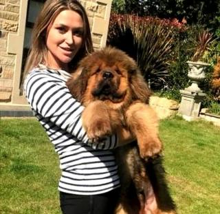Edinburgh court orders 14-stone dog which bit three women to be destroyed