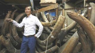 Daniel Chan, 70, managing director of a carving and jewellery factory, poses in between mammoth tusks inside his factory in Hong Kong (23 October 2015)