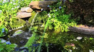 Image of wildlife pond with shade and vegetation for frogs courtesy of Paul Kleiman's garden
