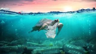 Tartaruga com saco plástico na boca
