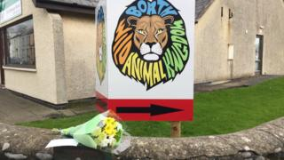 Flowers in tribute to Lilleth the lynx