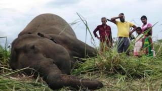 Villagers stand next to the dead body of an elephant laying in a field