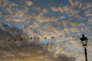 Birds flying in a cloudy sky