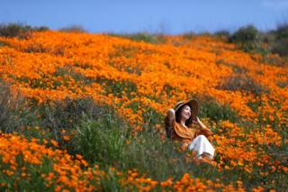 A woman sits in a super bloom of poppies in Lake Elsinore, California