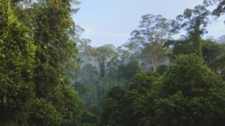 Binaadamu walichangia kaika upanzi wa miti ya Amazon kulingana na Utafiti