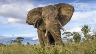 An elephant in Zimbabwe's Hwange National Park