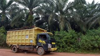 palm oil producer