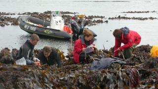 Northern Ireland Kelp researchers in Scotland