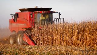Un granjero estadounidense cosechando soya.